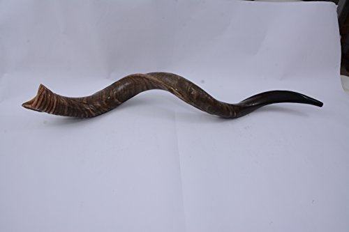 40″- 42″ Extra Large Yemenite Kudu Horn Full Natural Shofar, with Free Anti Odor Spray and Bag, Made in Israel