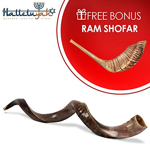HalleluYAH Shofar Set – Half Polished 40″-42″ Kudu Plus Ram Horn Kosher Shofar – Traditional Ancient Musical Instrument For Jewish Spiritual Ceremonies And Religious Sermons – Made In Israel